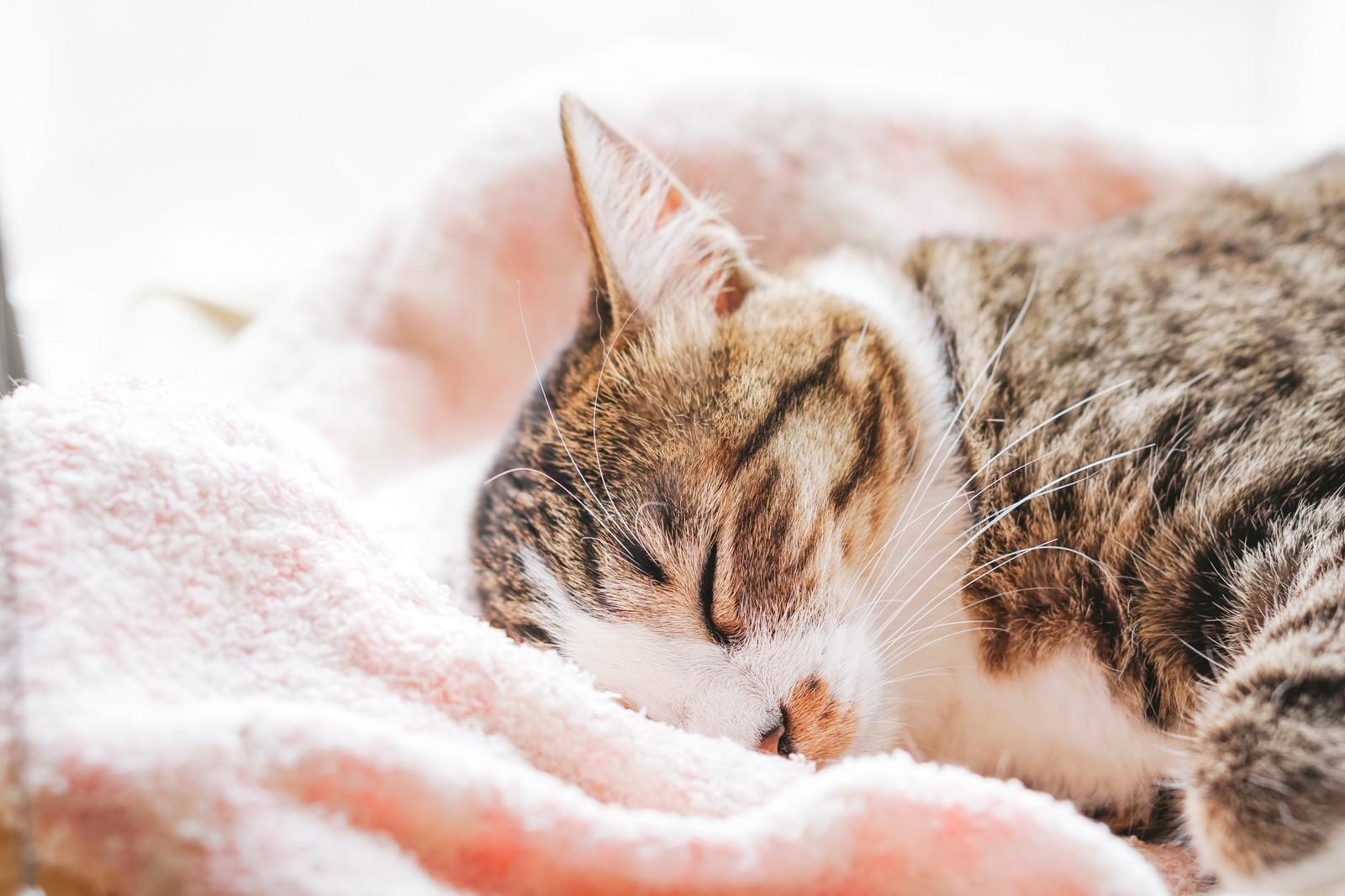 災害時、愛猫を守る為の備え
